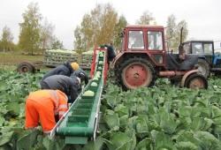Транспортёры для уборки овощей