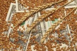 Цены на зерно упадут до рекордного минимума