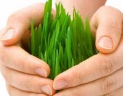 Навести порядок в агростраховании