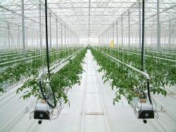 Процесс выращивания растений на гидропонике в ближайшее время значительно упростится