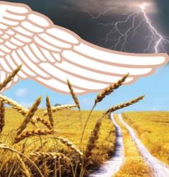 Агростраховой рынок Украины в ожидании реформ
