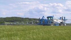 Выращивание овощей в теплице: особенности агротехники основных культур