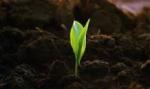 Противостояние бороны и гербицидов: наиболее опасные методы борьбы с сорняками