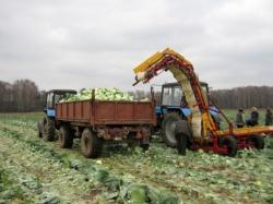 Проблемы механизации уборки капусты с полей