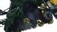 Сеялка пропашная HARVEST 560 MultiCorn