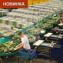 фото QSORT машина для сортировки удлиненного продукта