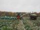 Транспортер для бережной уборки овощей НОУТ-6