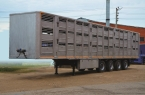 фото Полуприцеп для перевозки свиней