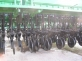 Сеялка GREAT PLAINS CPH - 2000 сошники