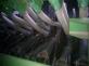 Гидравлика сеялки